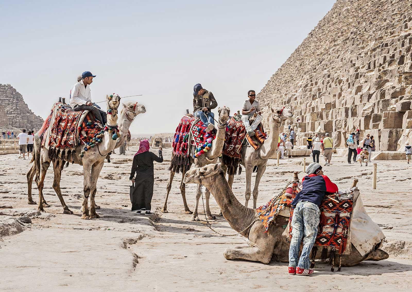Cairo camel rides