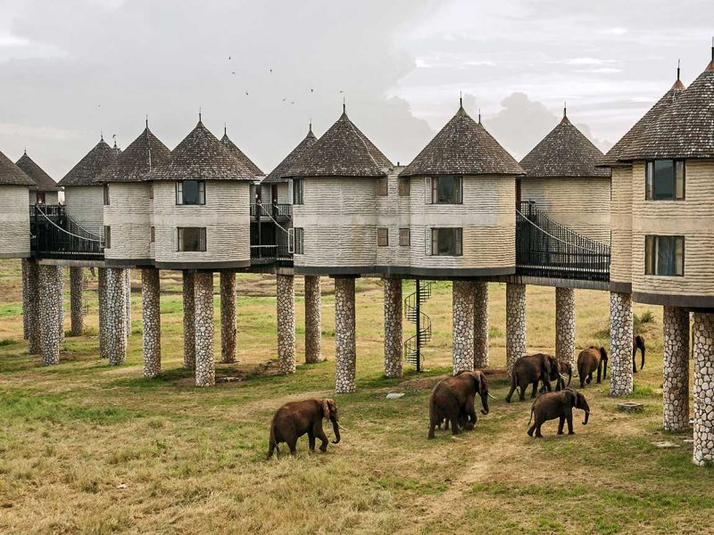 Sarova Salt Lick Lodge, Kenya